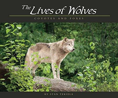 Stan Tekiela The Lives Of Wolves Coyotes And Foxes