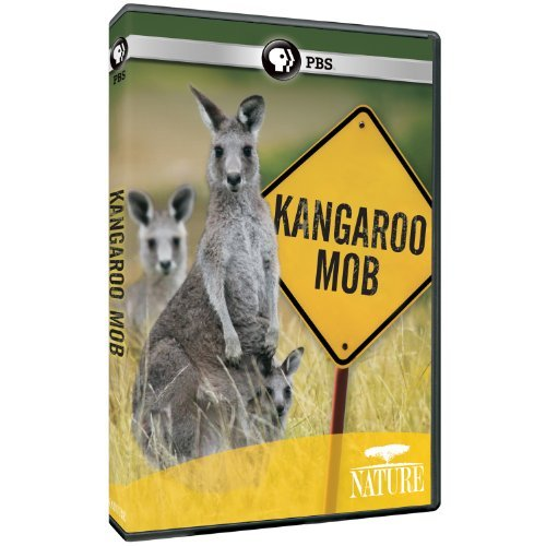 Kangaroo Mob Nature Nr