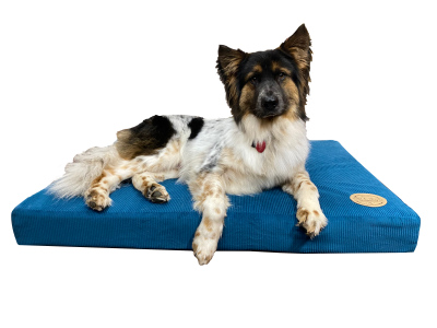 hollywood-feed-mississippi-cut-sewn-orthopedic-dog-bed