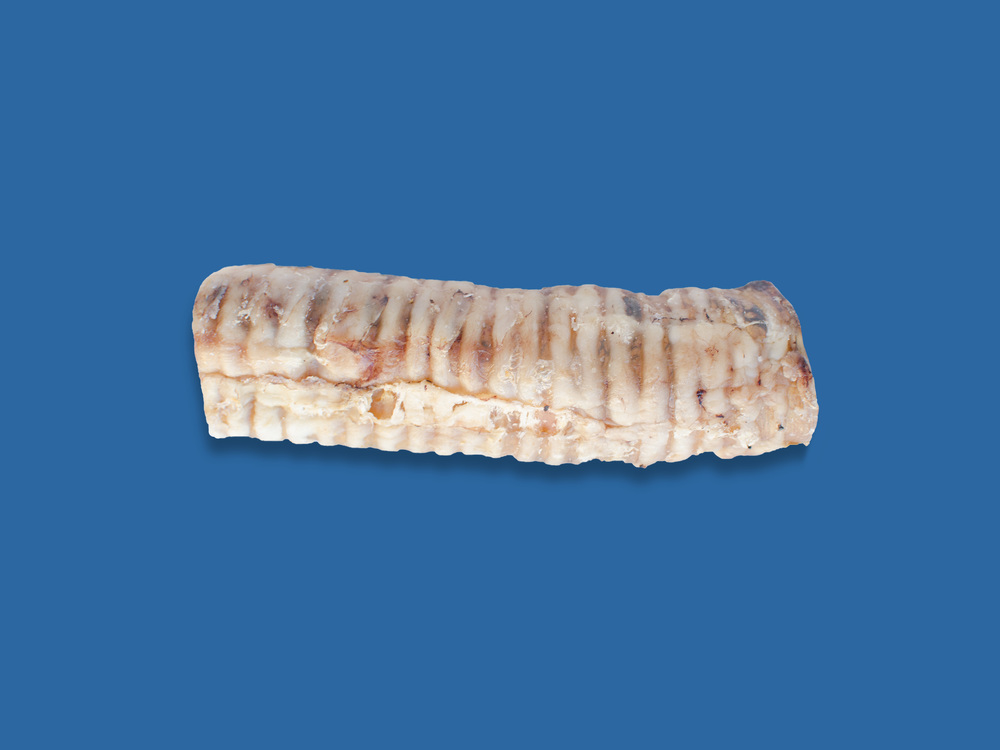 butchers-block-whole-trachea