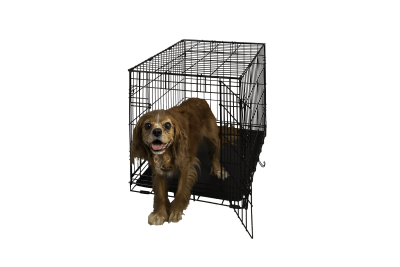 Hollywood Feed Dog Crate Single Door 30 Hollywood Feed Your Lo
