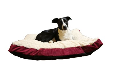 carpenter-company-dog-bed-nancy