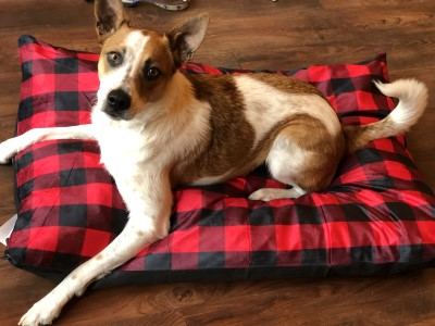 canine-cushion-dog-bed-rectangle-bed-assorted-patterns