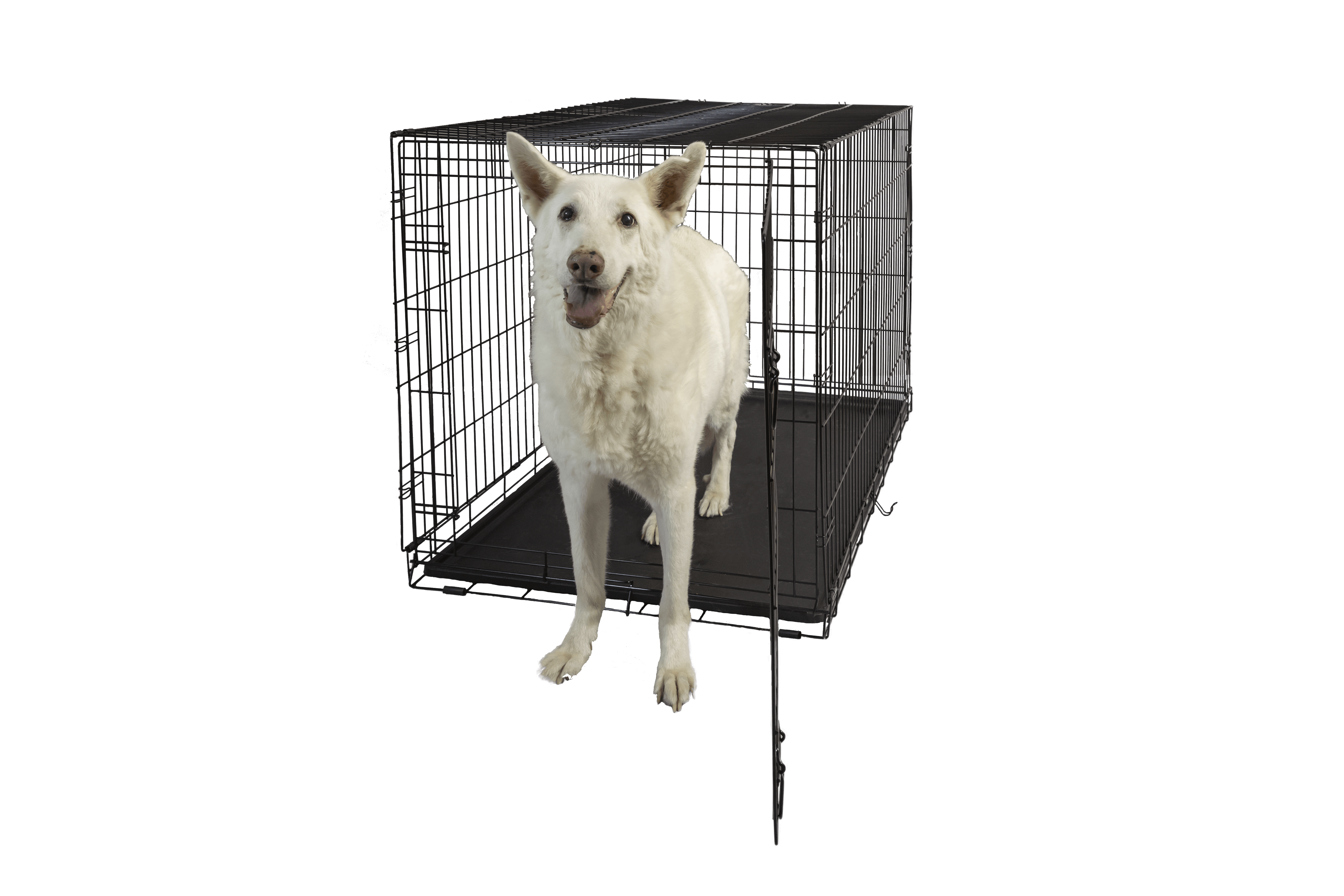 Hollywood Feed Dog Crate Single Door 48 Hollywood Feed Your Lo