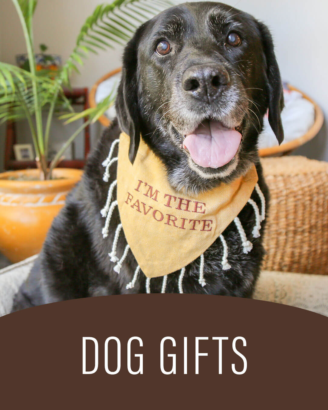 Dog Gifts